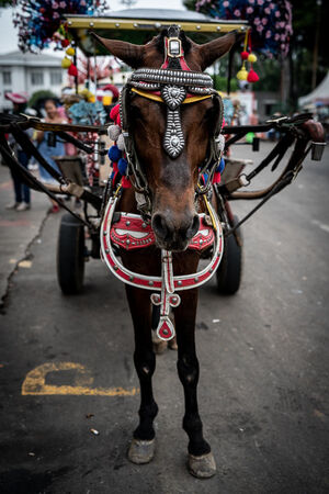 Horse waiting for customers near Fatahillah Square in Jakarta