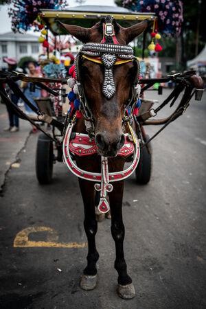 ジャカルタのファタヒラ広場近くでおとなしく客待ちしていた馬