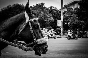 ファタヒラ広場近くで客待ちしていた馬の横顔