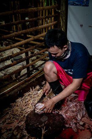 小屋の中で鶏をさばく男