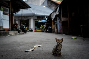 Kitten playing in the lane in Glodok district in Jakarta