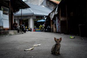 Kitten playing in the lane in Glodok district in Jakarta