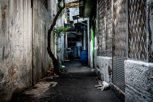 Cats relaxing in the deserted lane in Glodok district