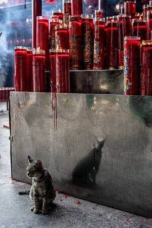 ジャカルタにある金徳院にいた猫