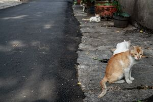 Four cats by the wayside in Jakarta
