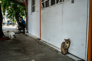 Two cats on the sidewalk of Sawah Besar district in Jakarta
