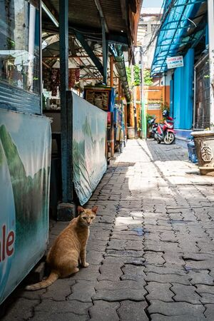 Cat looking back in front of an eating place