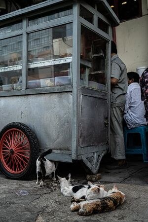 ジャカルタの屋台の近くで寝る猫