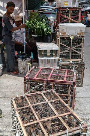 門前に置かれた放鳥用の小鳥の入った籠
