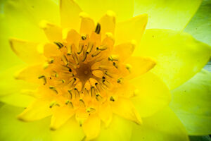 Closeup of yellow flower