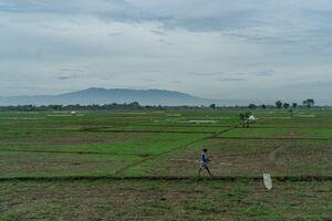Man walking the pathway between fields