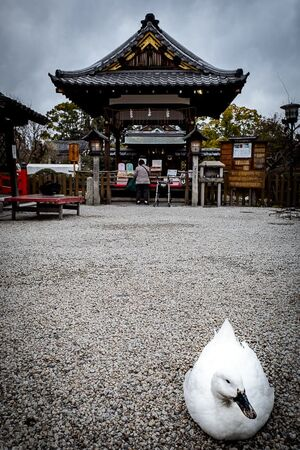 Duck in Shinsen-en