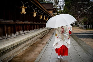 Shinto priestess with an umbrella walking through Kitano Tenmangu Shrine
