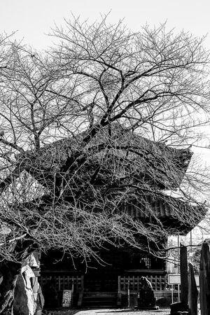 Sutra Repository at Suwasan Kichijoji Temple