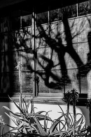 蓮乗院のアロエと影