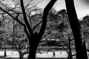 Deserted Sakura-dori in Ueno Park