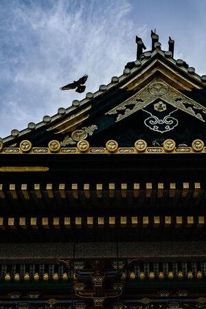 Pigeons at Ueno Toshogu Shrine