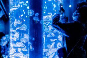 Jellyfishes in an aquarium