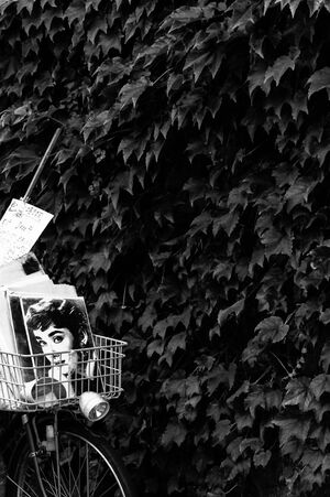 Audrey Hepburn in basket