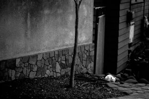 White cat concealing itself by wayside