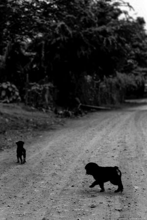 Two dogs in the graveled road