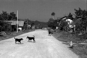 砂利道で遊ぶ犬たち