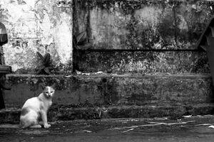 道路脇にお座りしていた猫
