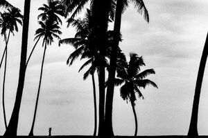 Small silhouette between palm trees