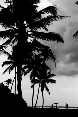 silhouettes under palm trees