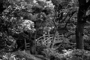 bridge in Former Yasuda Garden