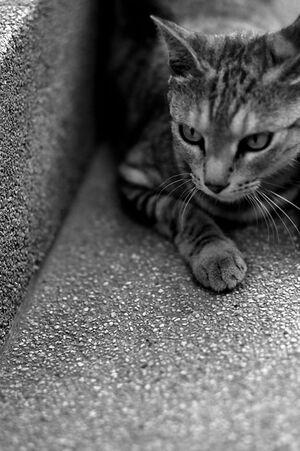 見詰める猫