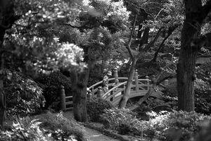 bridge in Yasuda-Teien park