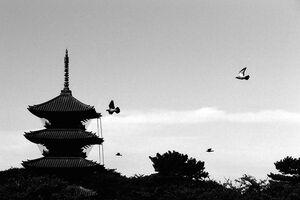 五重塔と鳥