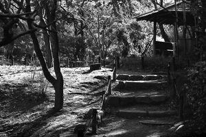 小屋へ続く小径