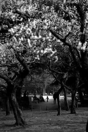 木の向こうに見える男の子