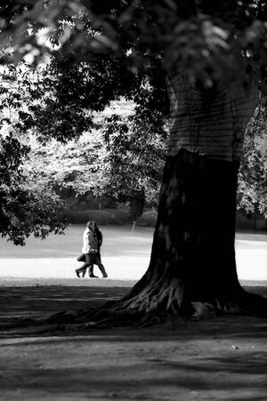 Couple on other side of tree