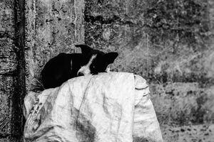 Sleeping black-and-white dog
