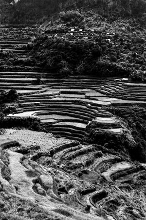 Rice terrace on steep slope