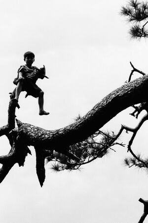 木に登った男の子