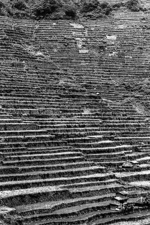 Rice terraces in Batad