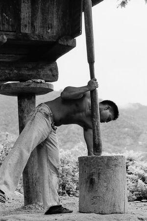 木の棒を使って米の脱穀をする男
