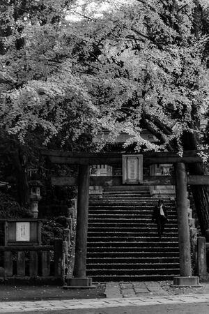 Torii of Komagome-Inari Jinja