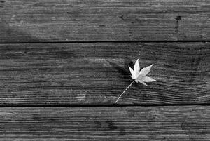 Maple leaf on wooden bench
