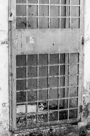 扉の向こう側で寛ぐ猫