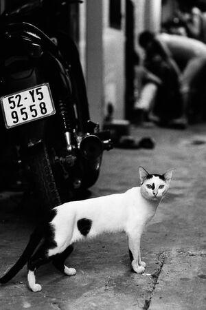 Cat looking back surprisingly
