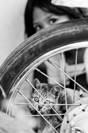 Girl showing cat through wheel