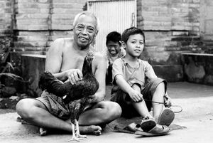 Old man, boys and rooster