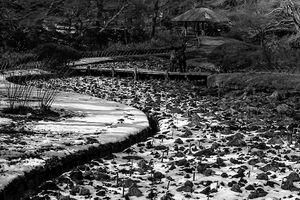Iris garden in Meiji Jingu Gyoen Garden