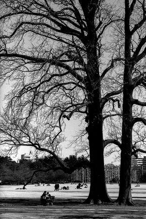 新宿御苑の大木の下にあるベンチ