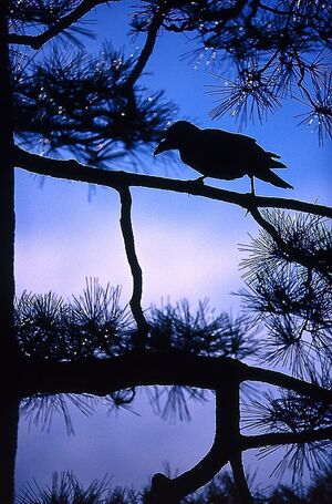 Crow perching on branch